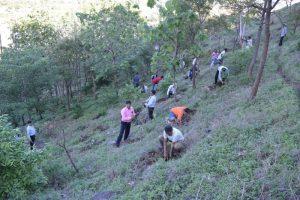 Tree Plantation at SPIS (12)