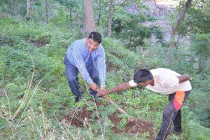 Tree Plantation at SPIS (4)