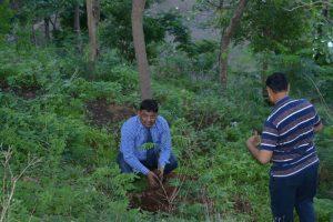 Tree Plantation at SPIS (5)